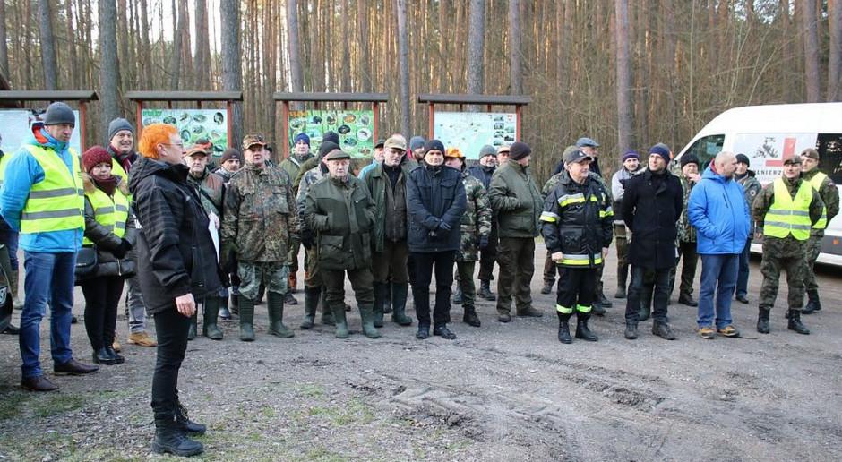 Przeszukano lasy pod Opocznem - nie znaleziono żadnego martwego dzika