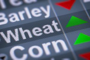 Elektroniczny handel na rynkach rolno-spożywczych