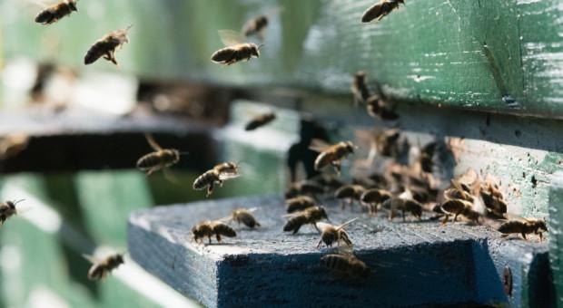 Pierwszy fungicyd stosowany tylko za pośrednictwem pszczół