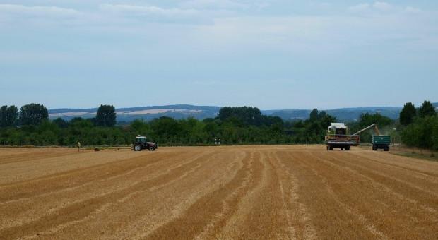 USDA: Prognoza światowej produkcji pszenicy prawie bez zmian, zbóż paszowych lekko wzrosła