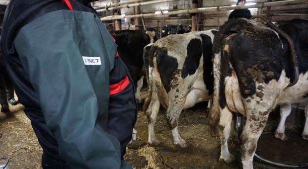Jakie ceny i terminy usługi udoju krów?