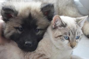 Nielegalny handel zwierzętami domowymi - surowsze kary w UE