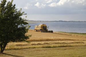 Stratégie Grains - niższa prognoza zbiorów pszenicy w UE