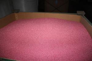 Tylko nasiona buraka cukrowego od KHBC będą zawierały neonikotynoidy