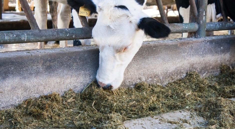 Szwecja: Pogłowie bydła maleje i maleje
