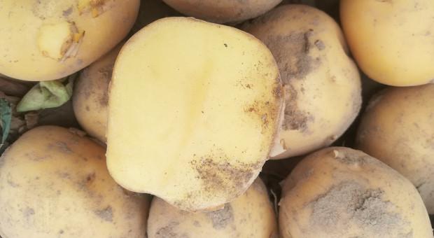 Polskie czy niepolskie ziemniaki?