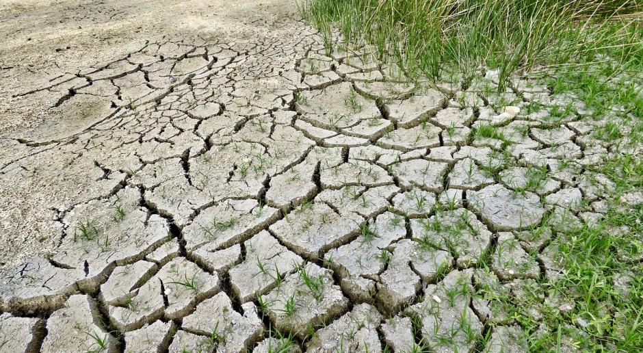 Australia: Niższa prognoza produkcji roślinnej