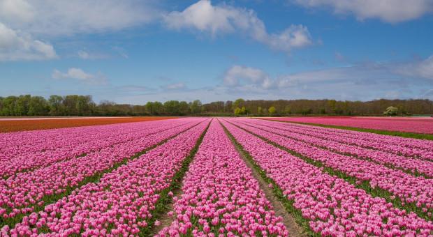 W 2019 r. wzrósł niderlandzki eksport produktów rolnych