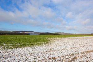 Zachodniopomorskie: Ciepła zima raczej nie zaszkodziła rzepakowi