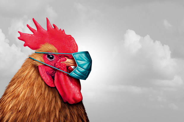 Przez wirusa grypy ptaków w Polsce znów liczymy straty