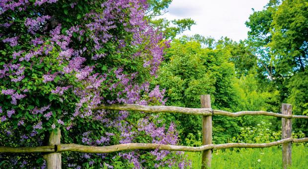 Kiedy drzewo przy granicy działki narusza prawa własności?