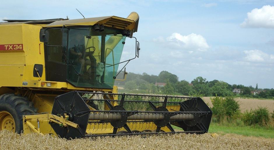 Rosja oczekuje drugich największych zbiorów ziarna zbóż