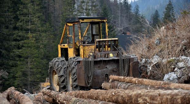 Lasy Państwowe zarabiają krocie na aukcjach luksusowego drewna