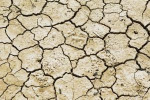 Jak zmiany klimatu mogą wpłynąć na sektor rolno-spożywczy?