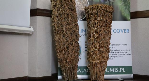 Kluczowe aspekty w uprawie soi