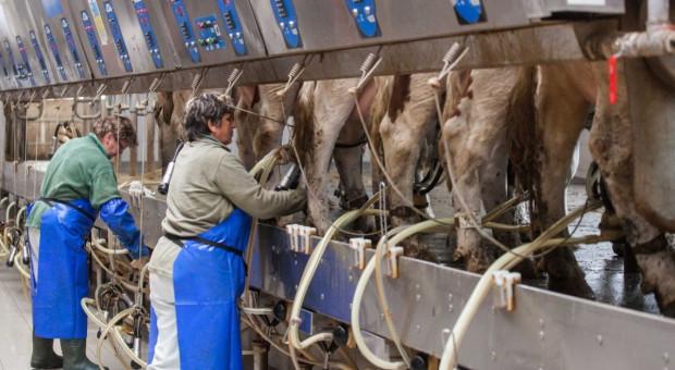 W styczniu 2020 r. spadła cena mleka