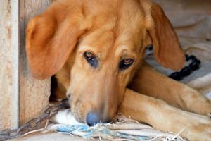 KO: w Senacie będziemy chcieli poprawić nowelę ustawy o ochronie zwierząt