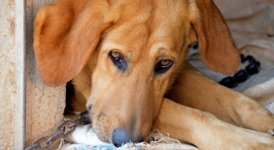 Senat: komisja ustawodawcza za możliwością odwołania się do sądu ws. rekompensat i obowiązkiem czipowania psów