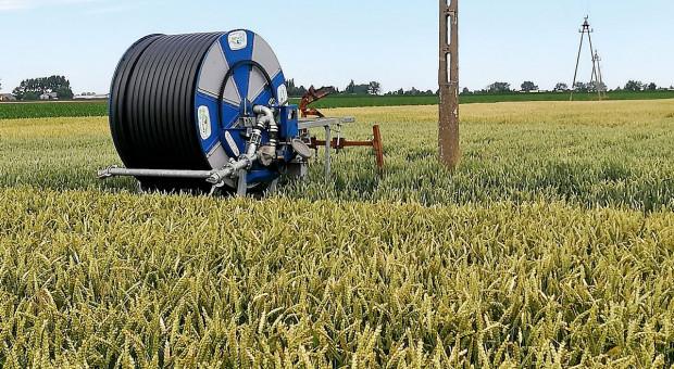 Czy nawadnianie zbóż ma sens?