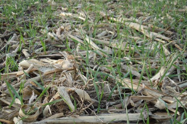 Ochrona gleby i wody w uprawie konserwującej