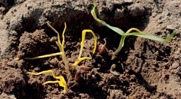 Susza wymusza zmiany w systemie uprawy gleby