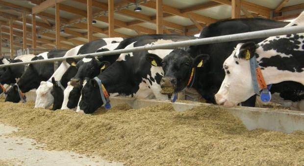 Fonterra pomaga rolnikom dotkniętym suszą