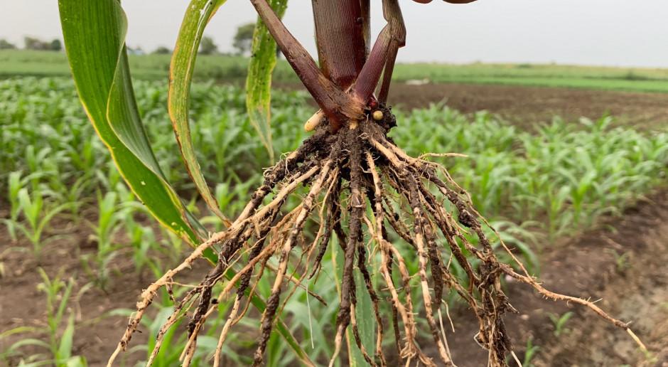 Nowa technologia przeciwdziałająca skutkom suszy