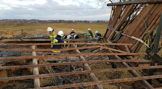 Wichura przewróciła stodołę. W środku uwięzione krowy