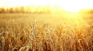 Czy giełda rolna będzie w stanie zapewnić płynność?