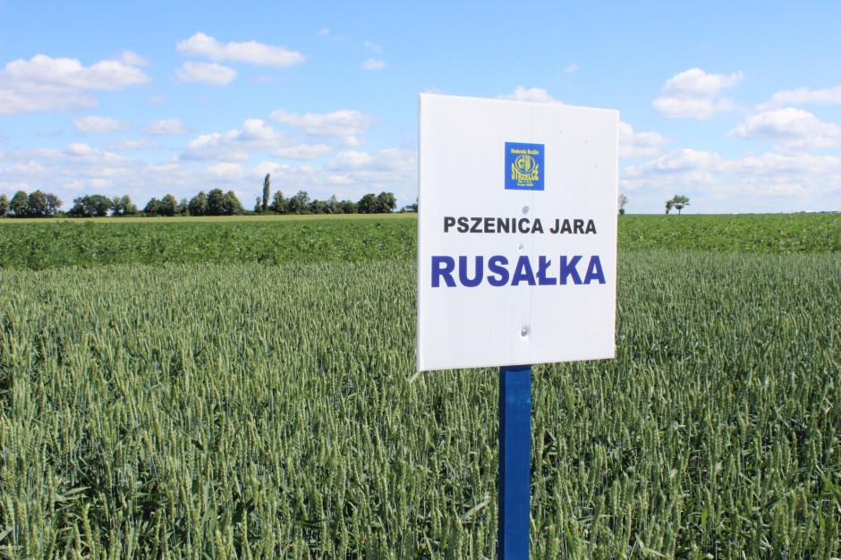 Odmiana Rusałka odznacza się dużą elastycznością siedliskową, stąd zalecana jest do uprawy aż w 15 województwach