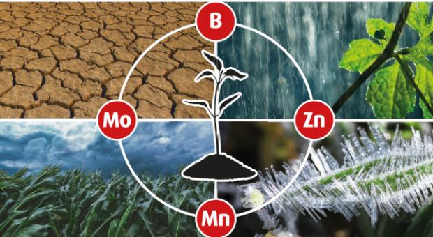 Activ Quatro Stress Control – nawóz dolistny zwiększający tolerancję roślin na czynnniki stresowe