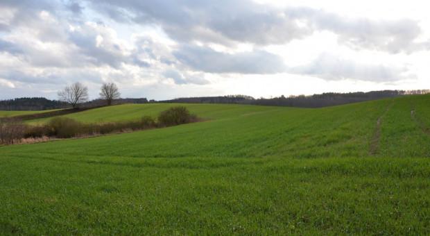 Potrzebna wcześniejsza ochrona fungicydowa