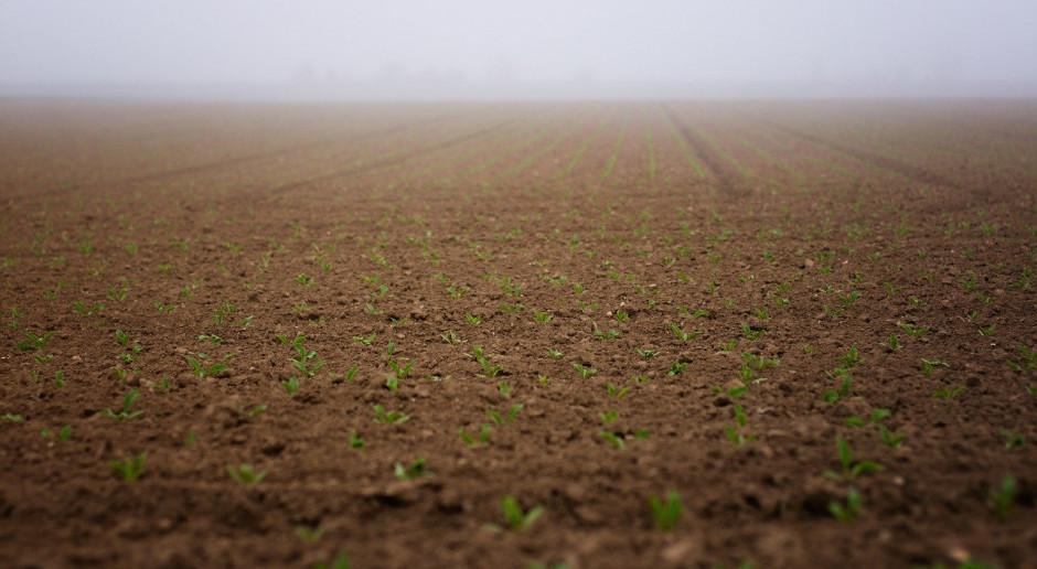Białoruś: Ministerstwo rolnictwa ogłosiło plany rozpoczęcia kampanii wiosennych zasiewów