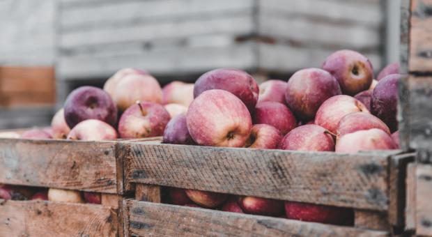 Unia Owocowa: tegoroczna produkcja jabłek ma wzrosnąć do 3,4 mln ton, w innych krajach nastąpi spadek