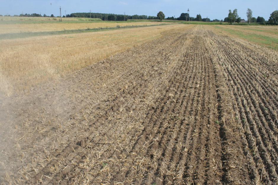 Tnący wał Packera bardzo dobrze dociska glebę, co stwarza bardzo dobre warunki do kiełkowania nasion samosiewów i chwastów