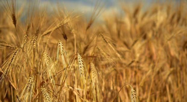 Kiedy poznamy stawki dopłat do nasion?
