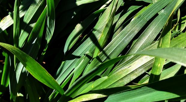 Mikroelementy ważne w ochronie roślin