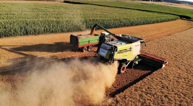 FAO: Wczesne oznaki prawie rekordowej światowej produkcji pszenicy w 2020 r.