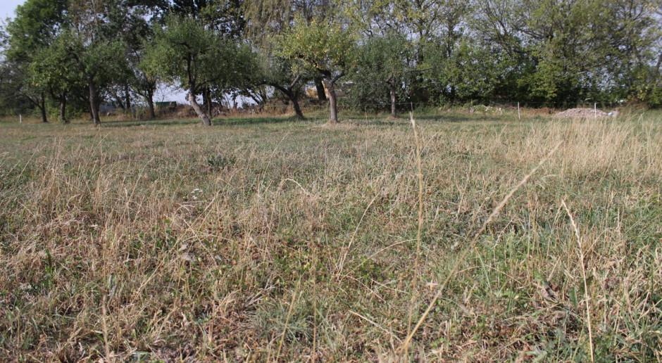 Jak wykorzystać potencjał użytków zielonych w obliczu suszy?