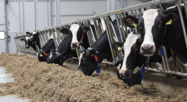 Co warto poprawić w stadzie, aby więcej zarabiać na produkcji mleka?
