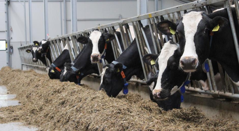 Potrzebne procedury na wypadek kwarantanny właścicieli stad mlecznych