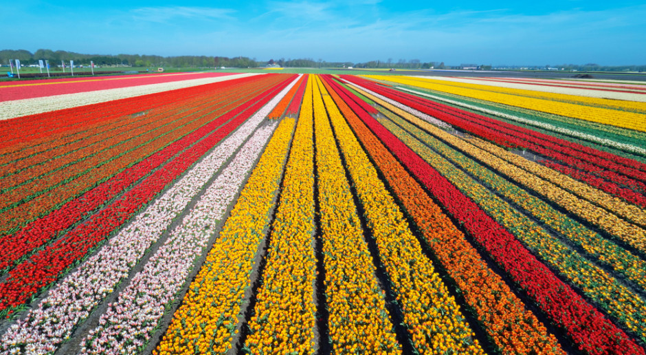 Niderlandy: Prawie żadnych bankructw w rolnictwie