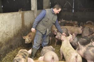 Gdzie szukać pomocy, jeśli właściciel zwierząt zostanie objęty kwarantanną?
