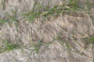 Czy jest wilgoć w głębszych warstwach gleby?