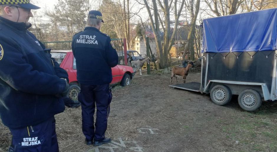 Kozy zabrane z zagraconej posesji