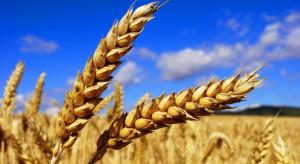 Niewielka korekta notowań pszenicy na giełdach