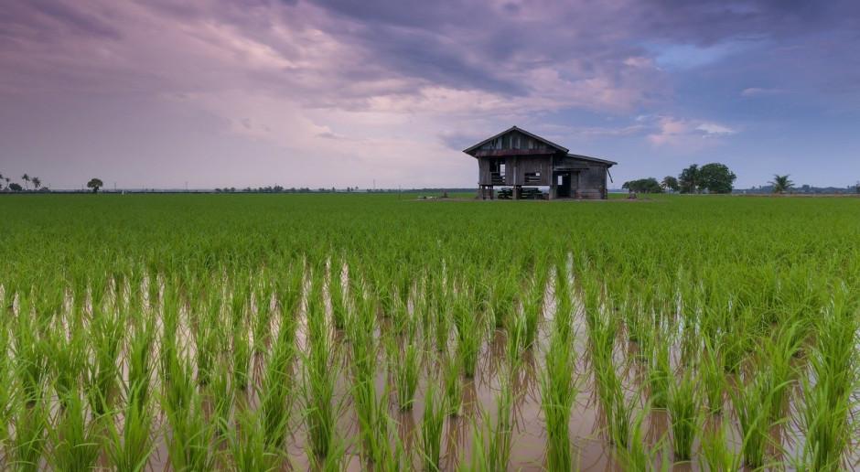 Wietnam przestaje eksportować ryż