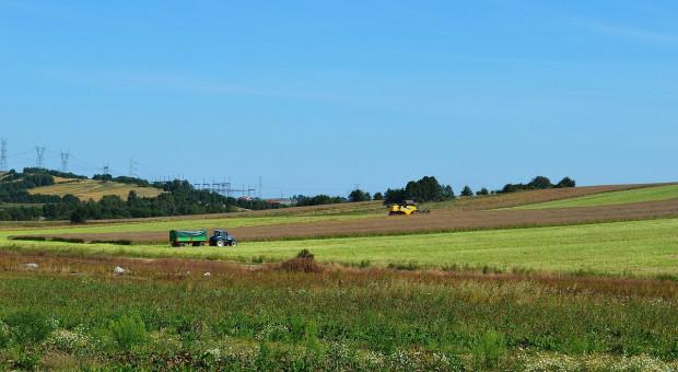 IGC: Wyższe prognozy światowej produkcji pszenicy i zbóż paszowych