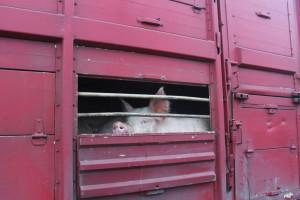 Świadectwa zdrowia i paszporty zwierząt przysyłane e-mailem?