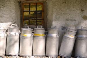 MRiRW o mechanizmach wspierających rynek mleka